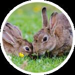 konijnen-1.png