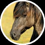 paarden-1.png